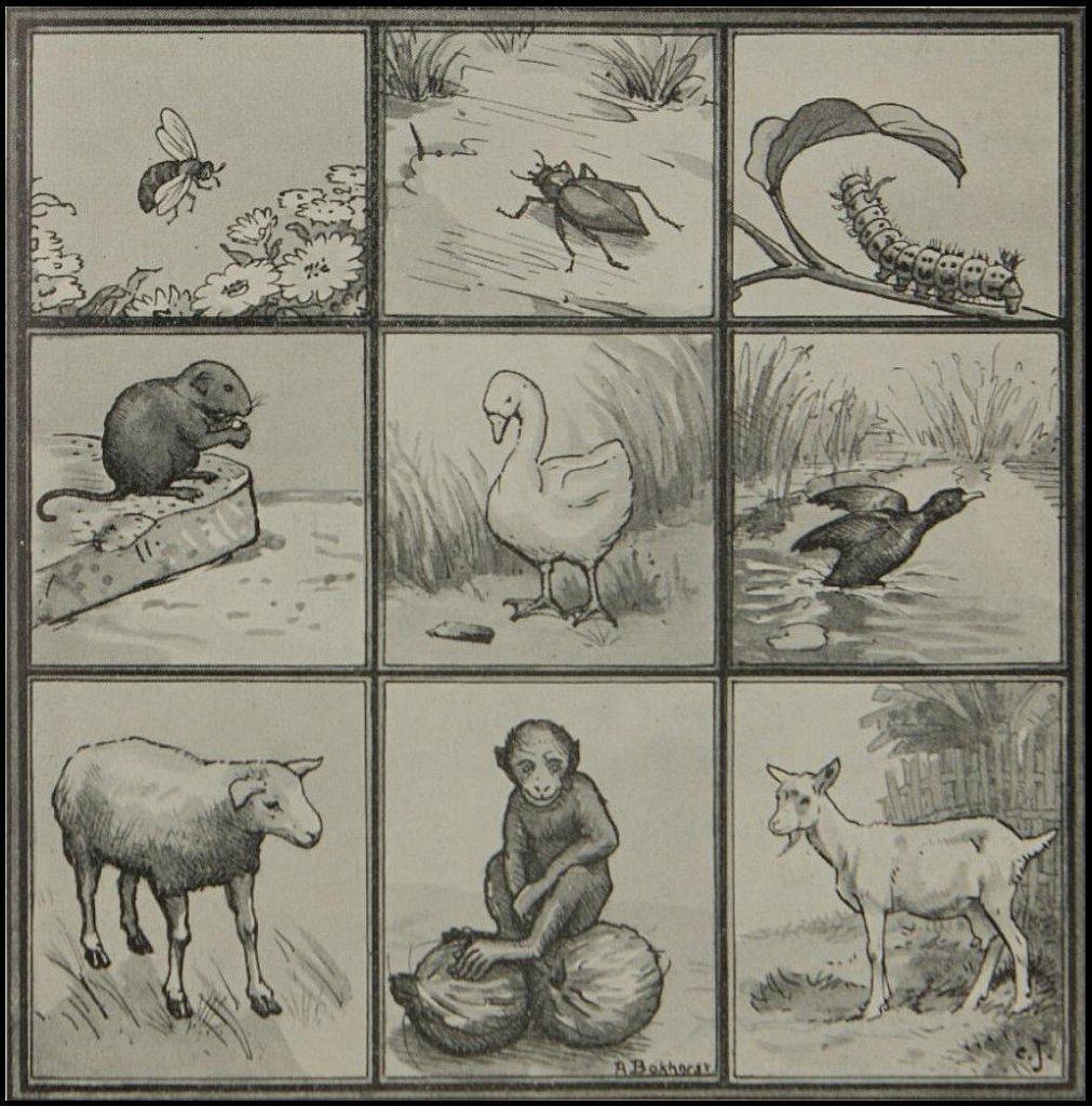 Album Illustraties Arnold